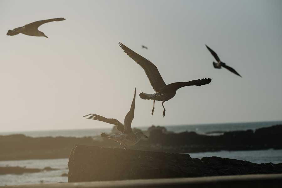Jatinga, Assam- The Mysterious Death of Birds